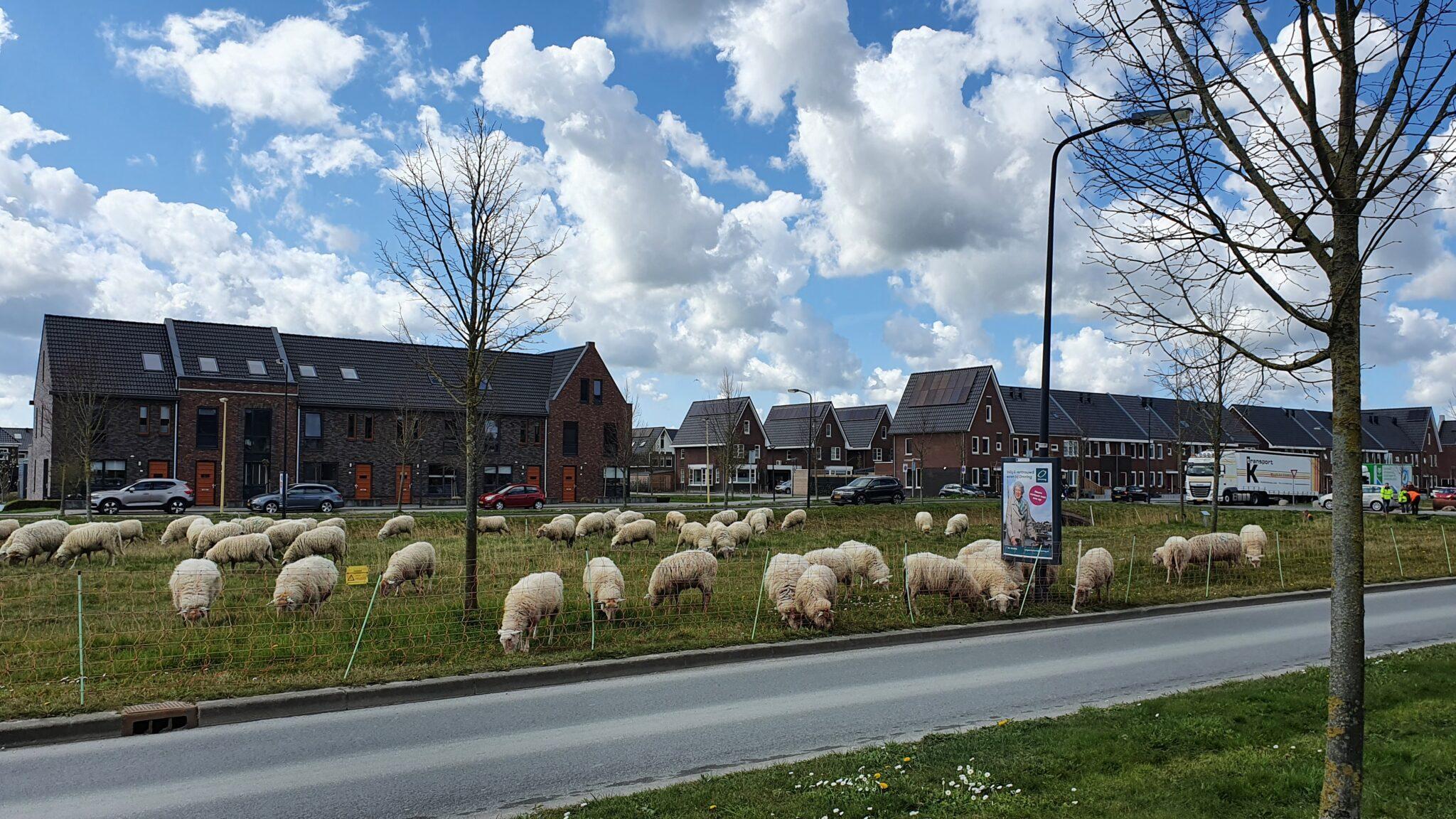 Puur Natuur In Bangert & Oosterpolder